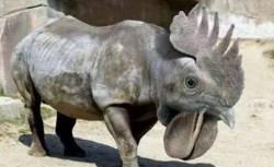 Gambar badak berkepala ayam unik