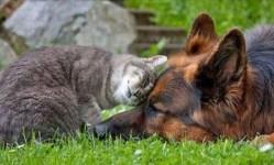 Gambar unik persahabatan anjing dan kucing